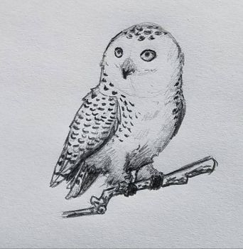 Owl Sketch by autumnewolf
