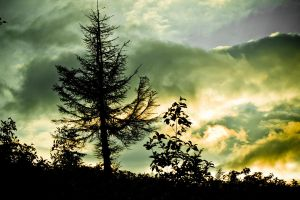 Hill - trees - sunset by safato