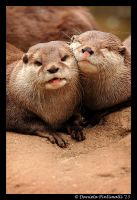 Otterly Adorable by TVD-Photography