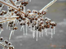 Ice Storm series 5 by GramMoo