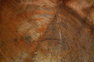 Wood Texture 17 by Limited-Vision-Stock