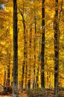 Gold in them trees by Schwingding