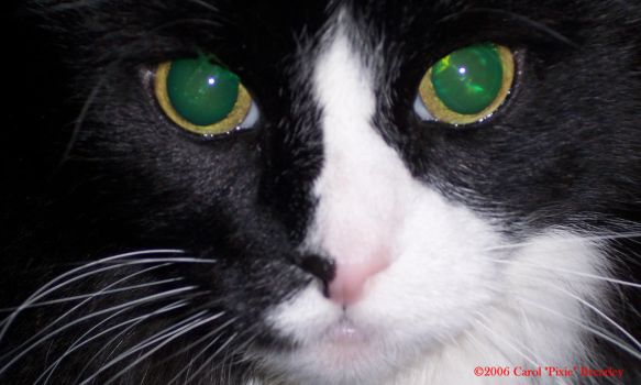 Close-up of Henry Cat by Faerybug