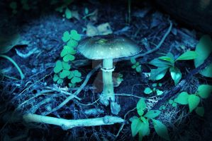 The Toadstool by concettasdesigns