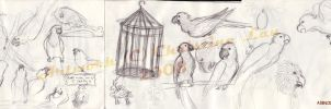 Parrot sketches by Asenceana