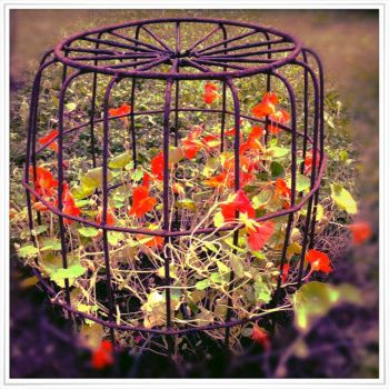 Caged flowers, cruelty, protection, beauty combine by Fazerina