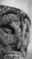 Wise Owl by Mckronic