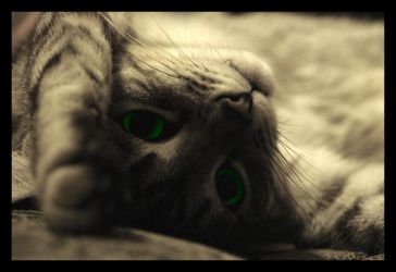 Green-eyed cat by Cavin