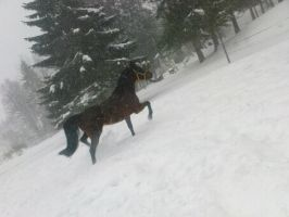 Snow horses1 by SwedenGirl