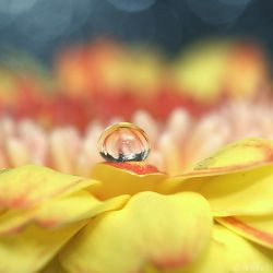 yellow drop. by simoendli