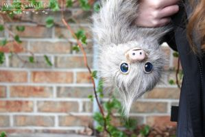 Evelyn the Poseable Sloth by whatleyswildlife