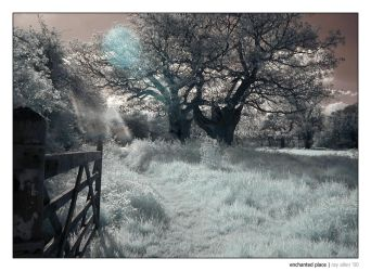 Infrared - enchanted place by Raymate