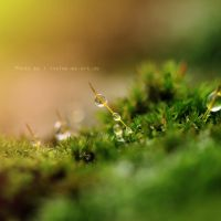 Drops in the morning by Inside-my-ART