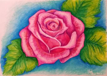 Pink As A Rose by stephalynnd