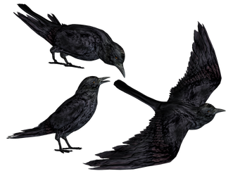 Crows PNG Stock by Roy3D
