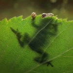 Tree Frog by Pikishi