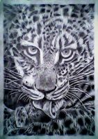 hungry leopardpencil art by firmanhadry