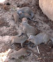 Zoo.MONGEESE by talonsofchaos