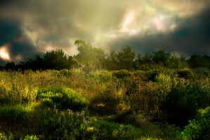 Light after storm by Louisolah