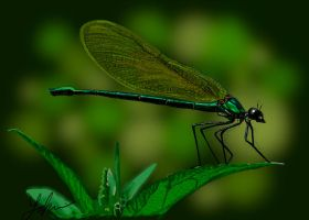 Dragonfly by RedSaucers