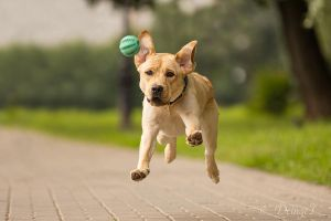 Labradors can fly! by DeingeL-Dog-Stock
