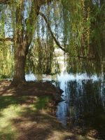 Weeping Willow Stock by Tefee-Stock