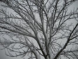 Snow Tree Four by itsayskeds