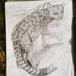 Leopard cat by Rtistry