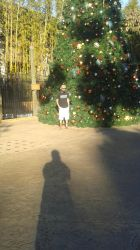 Andrew and Giant Christmas Tree by raysona