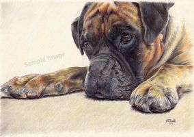 Time Out - Boxer by SRussellart