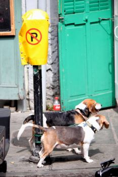 Dog Parking by mpn0812