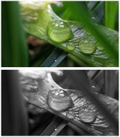 Leaf Droplet by JenniBeeMine