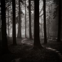 Path in the woods by kpavlis