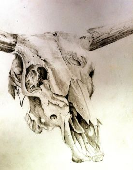 Cow Skull by Lucky978