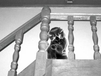 Cat at the top of the stairs by jande