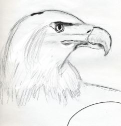 my bald eagle by lassegorm