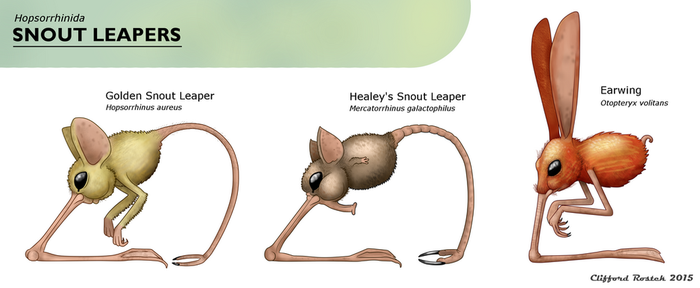 Snout Leaper Identification Chart by Clawedfrog