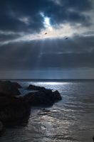 Point Lobos 2161 by hfpierson