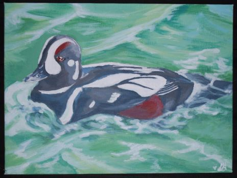 Harlequin Duck by Narret