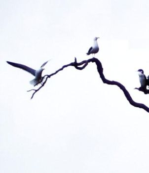 Seagulls: Branch by Flynn-the-cat