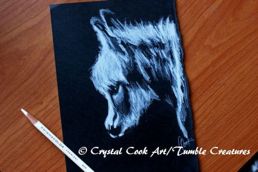 White on Black Donkey Sketch by crystalcookart