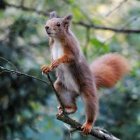Standing Squirrel by SnowPoring