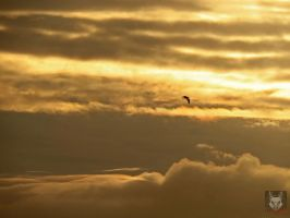 Seagull Flying Against Clouds by wolfwings1