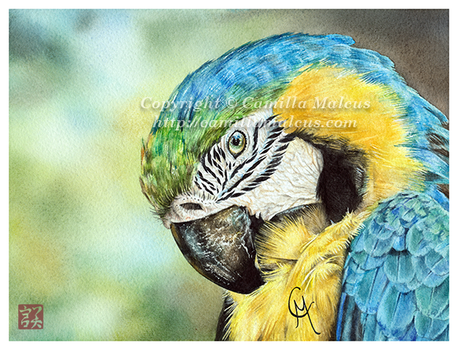 Blue and Yellow Macaw by CamillaMalcus