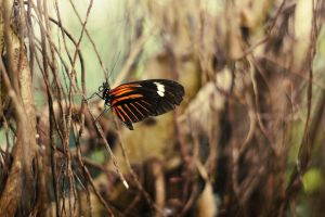 Butterfly IV by ChromaticBokeh