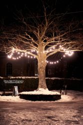 Christmas Lights - Day 141 by escaped-emotions