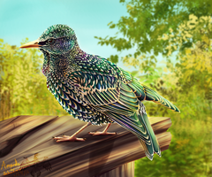 The Starling by r-20