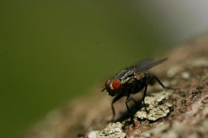 Fly on Bark 2 by CageyResources