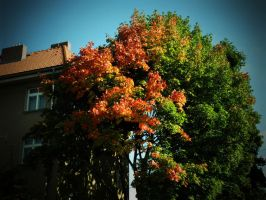 Colors. by Luczynka