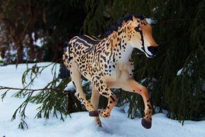 From the African Savanna to the Frozen Tundra by KLK-Photography